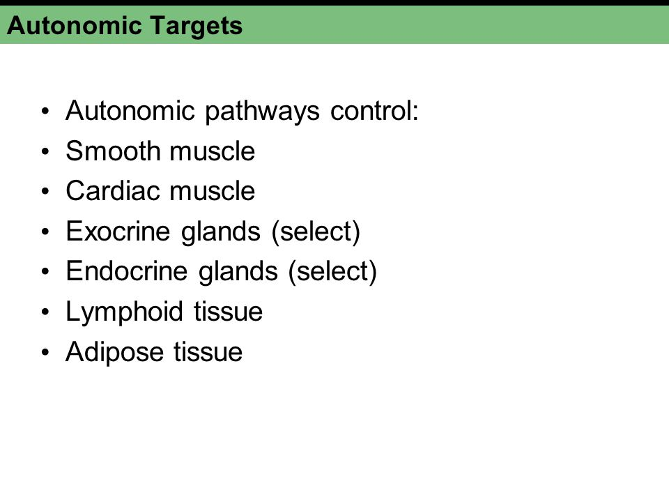 Autonomic pathways control: Smooth muscle Cardiac muscle