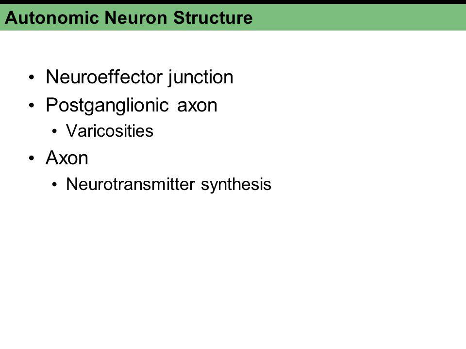 Autonomic Neuron Structure