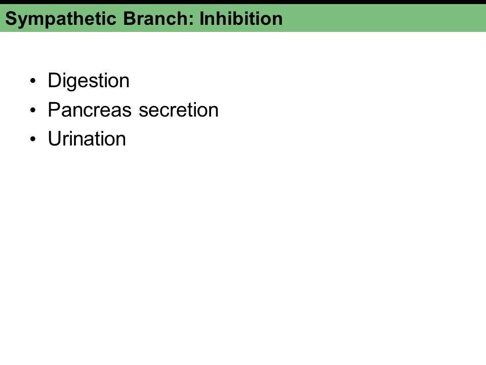 Sympathetic Branch: Inhibition