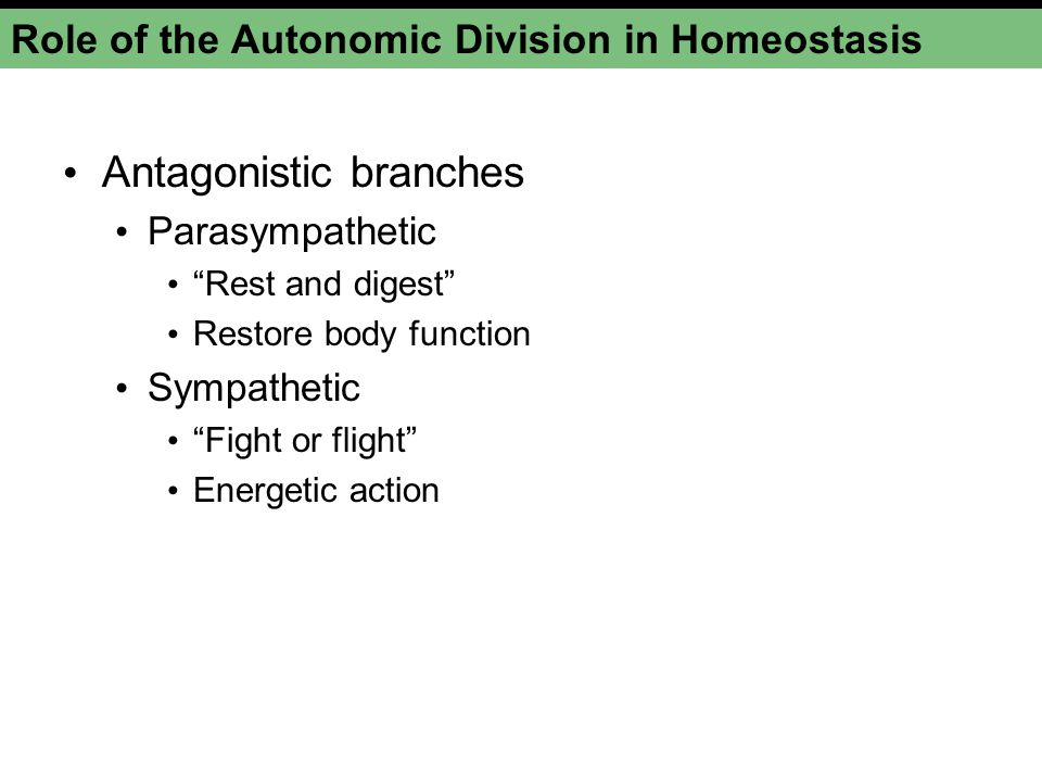 Role of the Autonomic Division in Homeostasis