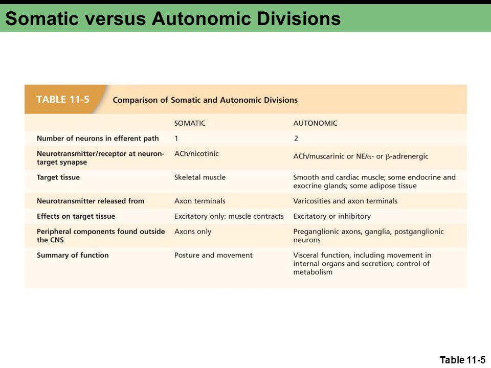 Somatic versus Autonomic Divisions