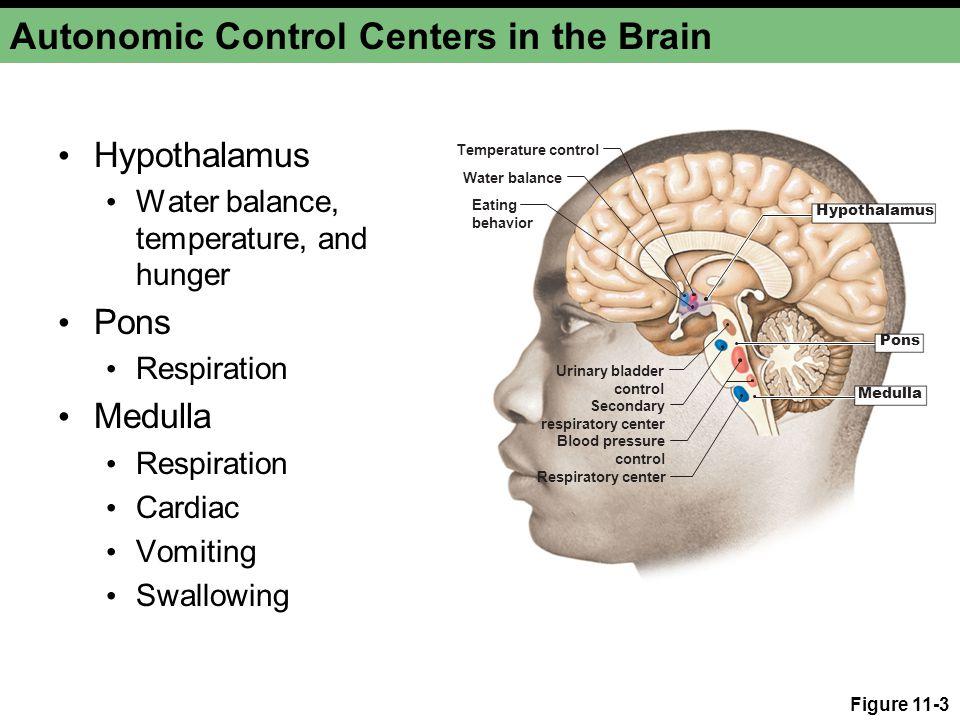 Autonomic Control Centers in the Brain