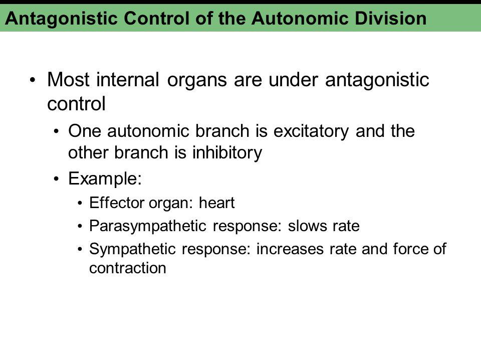 Antagonistic Control of the Autonomic Division