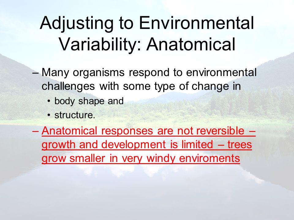 Adjusting to Environmental Variability: Anatomical