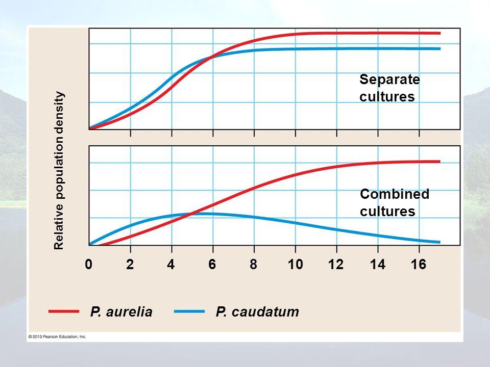 Separate cultures Combined cultures 2 4 6 8 10 12 14 16 P. aurelia