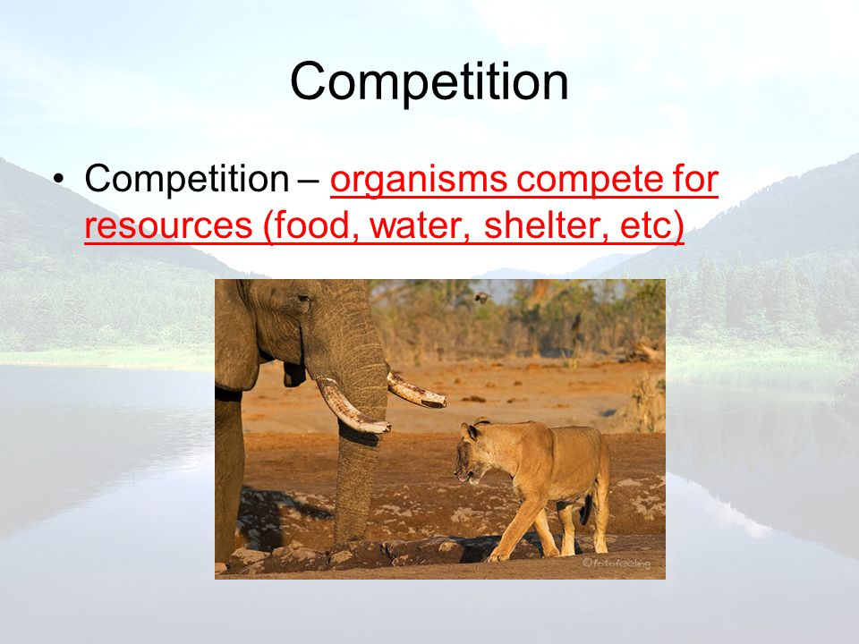 Competition Competition – organisms compete for resources (food, water, shelter, etc)