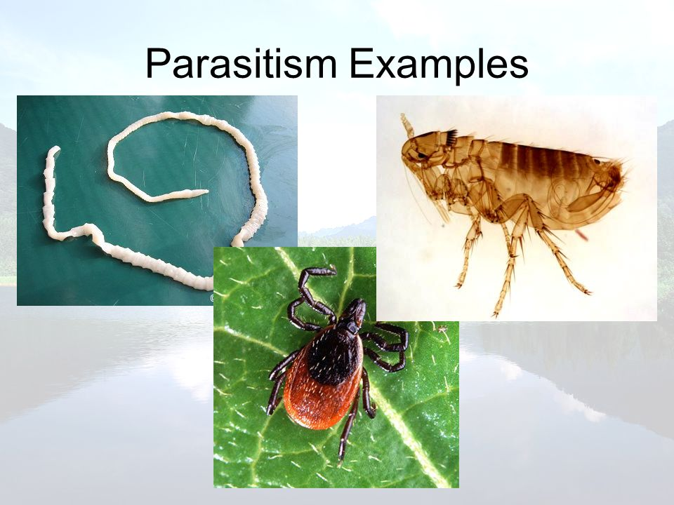 What Shapes An Ecosystem Ppt Video Online Download