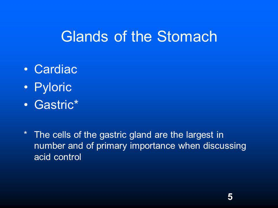 Glands of the Stomach Cardiac Pyloric Gastric*
