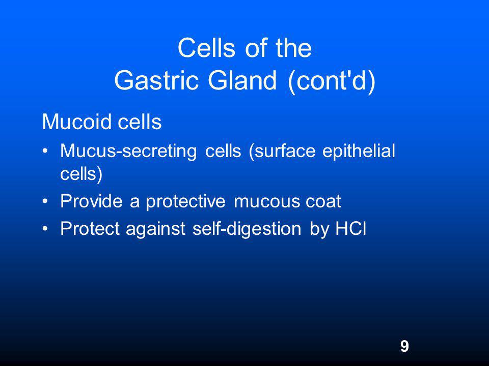 Cells of the Gastric Gland (cont d)