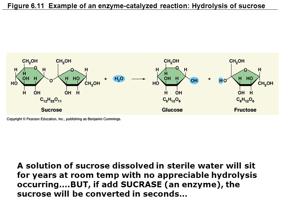 Figure 6.11 Example of an enzyme-catalyzed reaction: Hydrolysis of sucrose