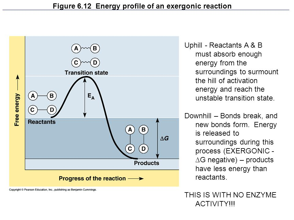 Figure 6.12 Energy profile of an exergonic reaction