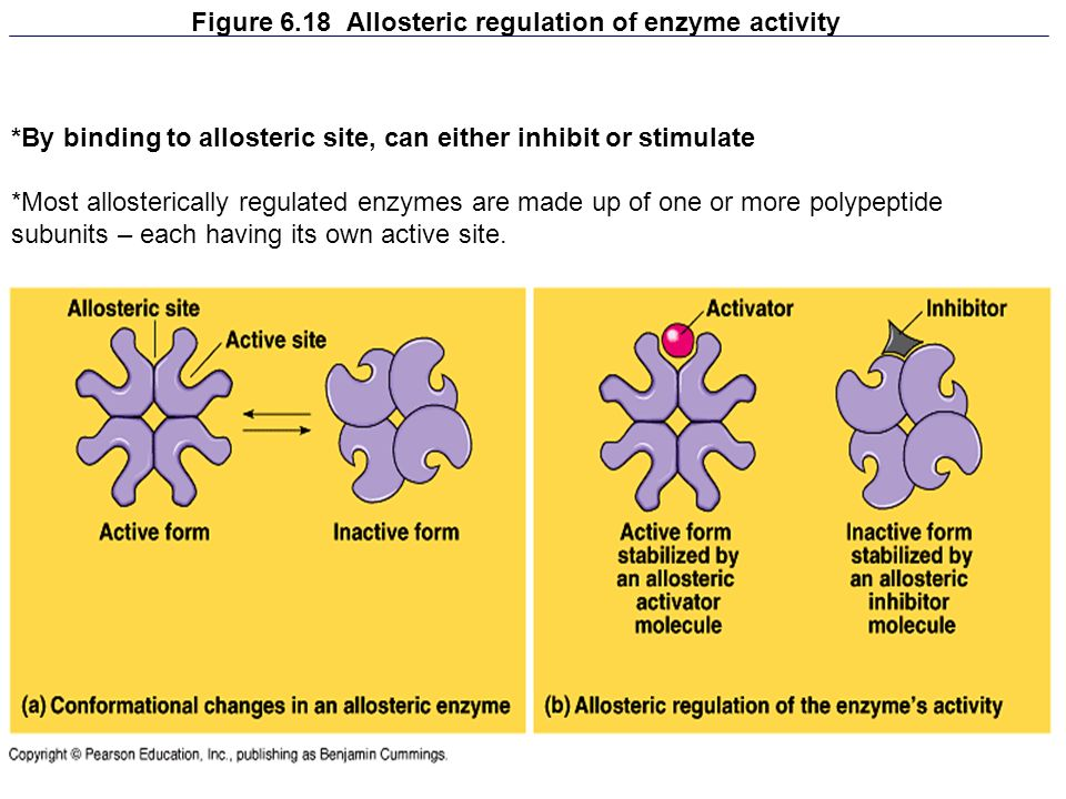 Figure 6.18 Allosteric regulation of enzyme activity