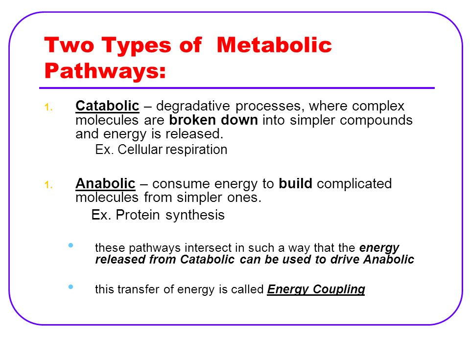 Two Types of Metabolic Pathways: