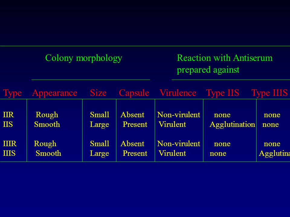 Colony morphology Reaction with Antiserum prepared against