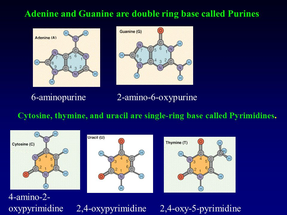 Adenine and Guanine are double ring base called Purines