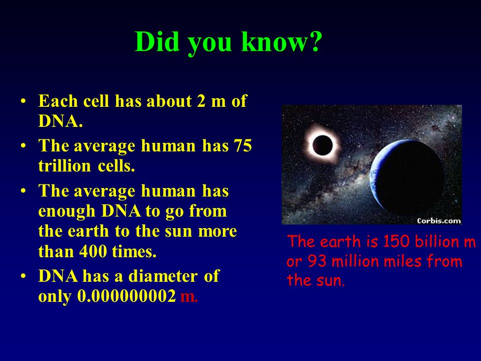 Did you know Each cell has about 2 m of DNA.