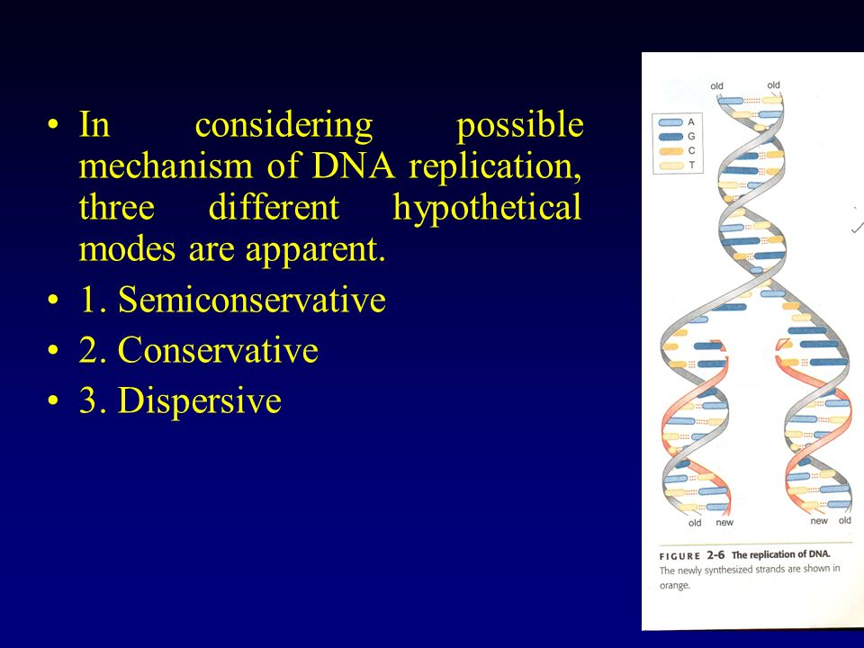 In considering possible mechanism of DNA replication, three different hypothetical modes are apparent.