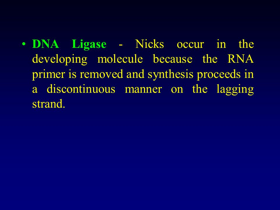 DNA Ligase - Nicks occur in the developing molecule because the RNA primer is removed and synthesis proceeds in a discontinuous manner on the lagging strand.