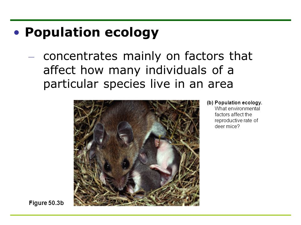 Population ecology concentrates mainly on factors that affect how many individuals of a particular species live in an area.