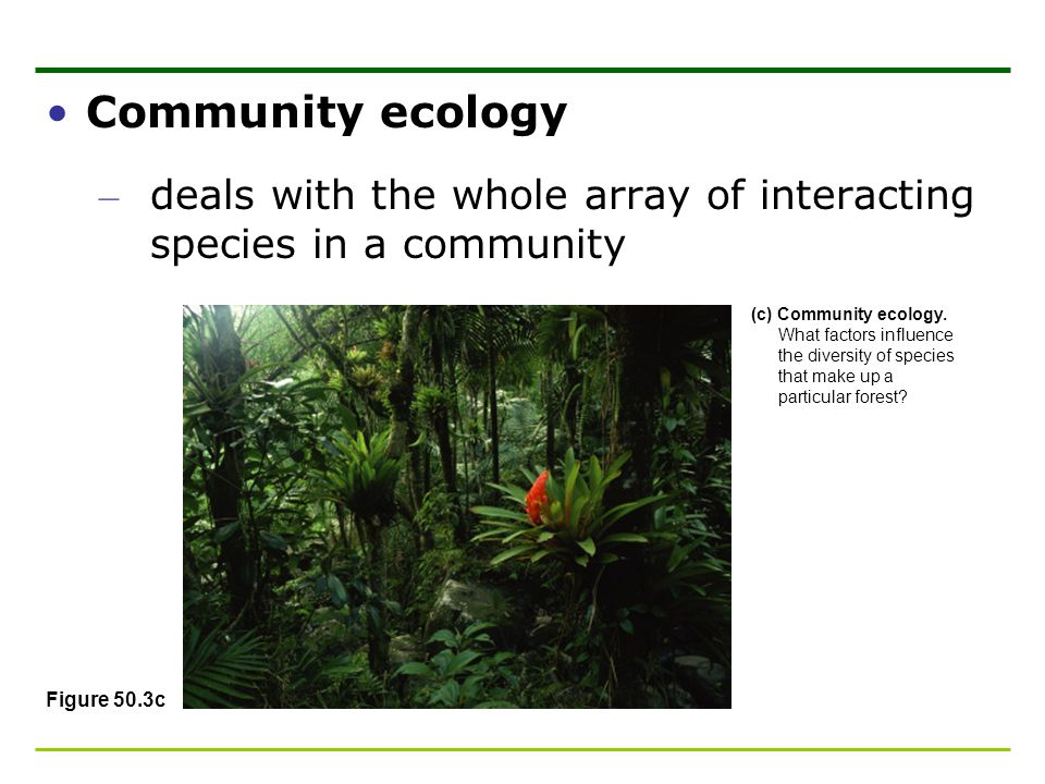 Community ecology deals with the whole array of interacting species in a community.
