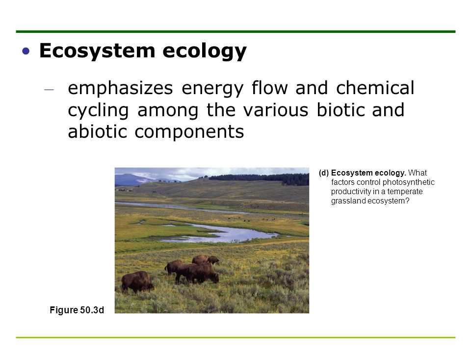 Ecosystem ecology emphasizes energy flow and chemical cycling among the various biotic and abiotic components.