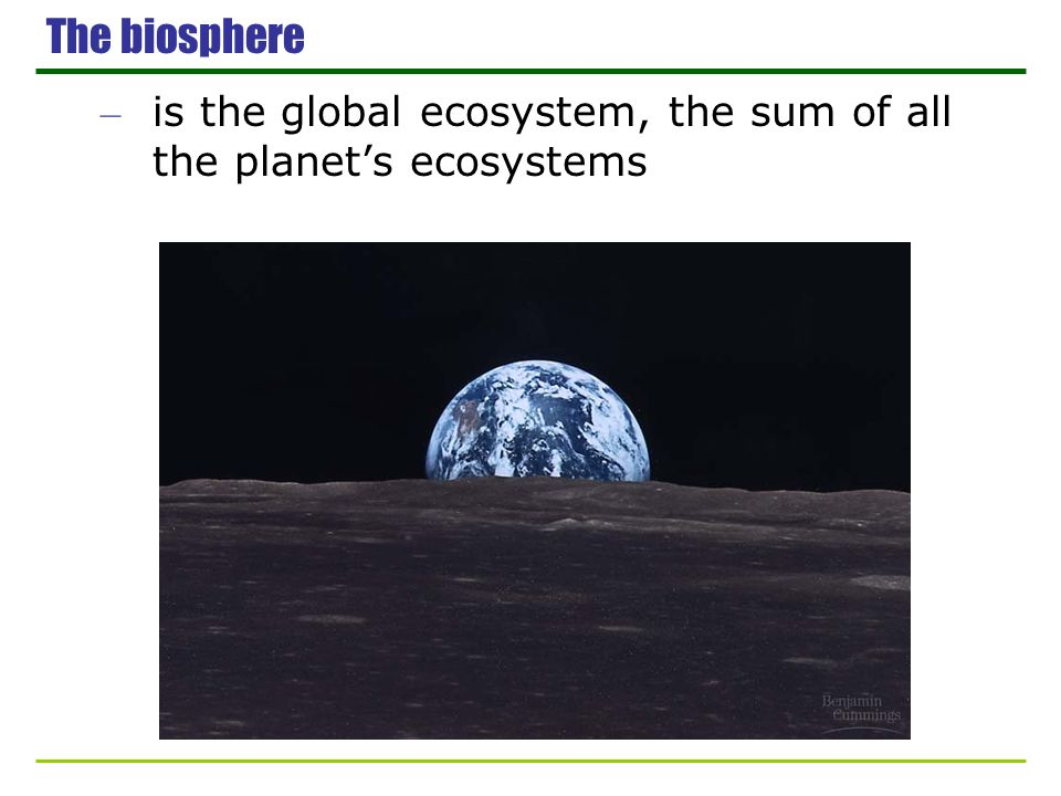 The biosphere is the global ecosystem, the sum of all the planet's ecosystems