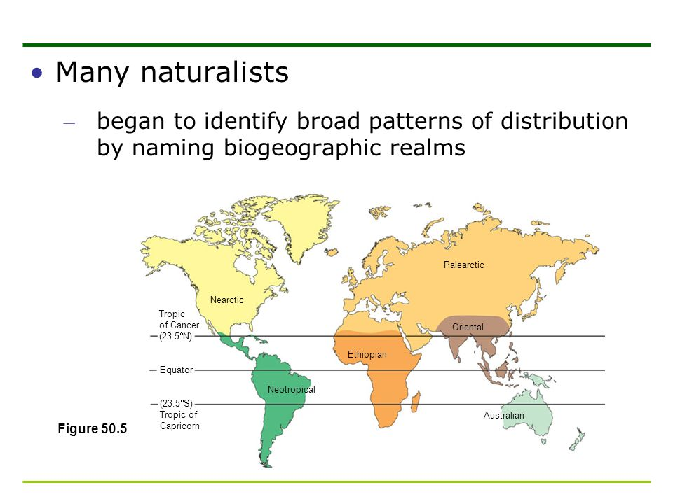 Many naturalists began to identify broad patterns of distribution by naming biogeographic realms. Tropic.