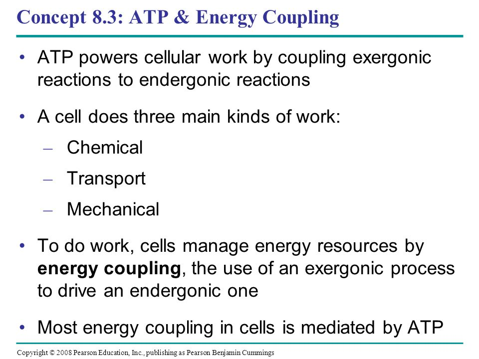 Concept 8.3: ATP & Energy Coupling