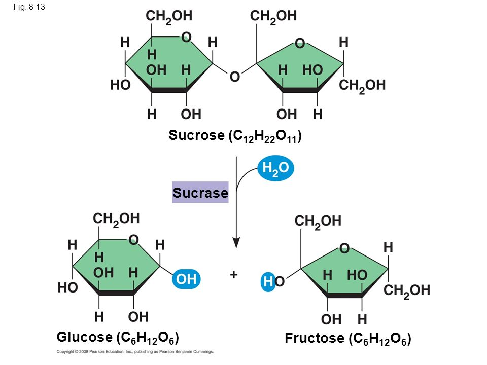 Sucrose (C12H22O11) Sucrase Glucose (C6H12O6) Fructose (C6H12O6)