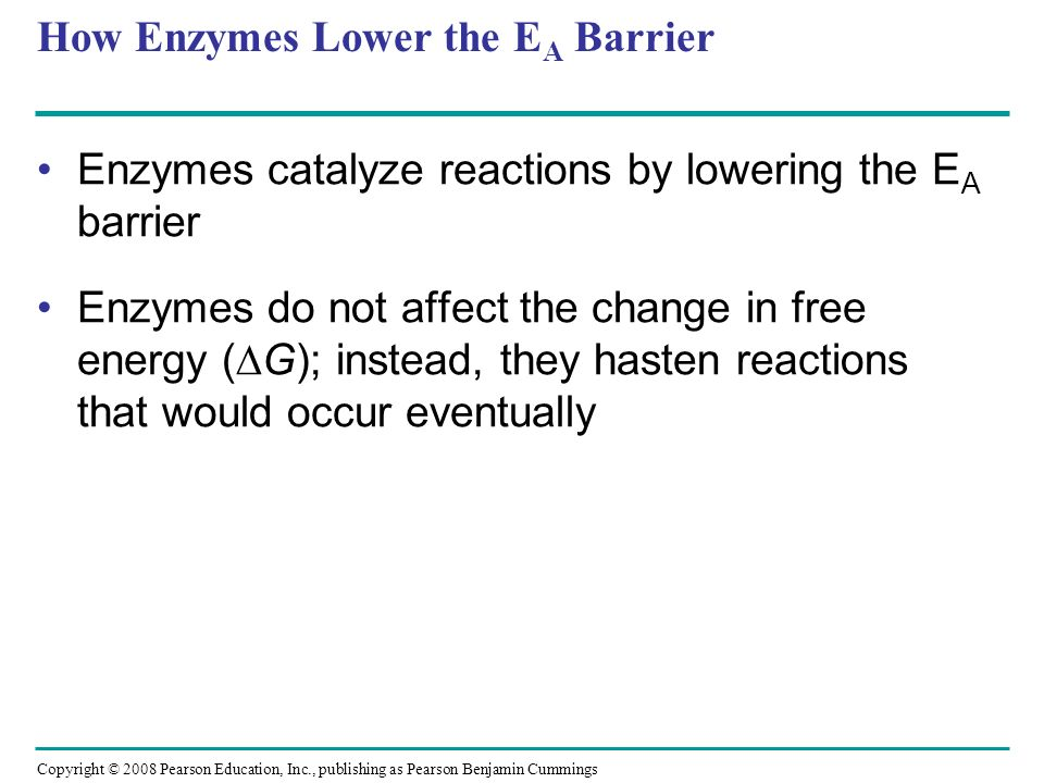 How Enzymes Lower the EA Barrier