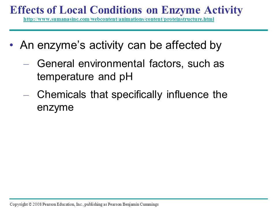 An enzyme's activity can be affected by