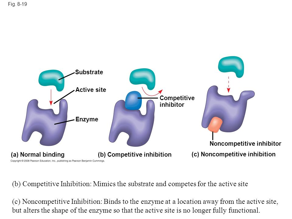 Fig. 8-19 Substrate. Active site. Competitive. inhibitor. Enzyme. Figure 8.19 Inhibition of enzyme activity.