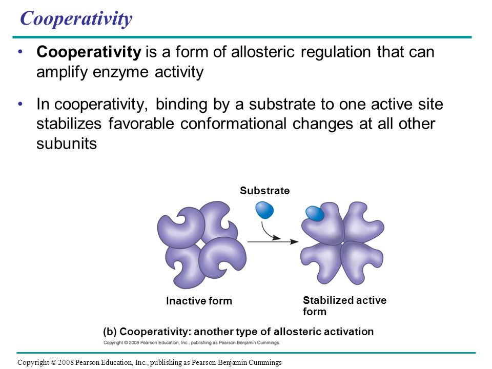 Cooperativity Cooperativity is a form of allosteric regulation that can amplify enzyme activity.