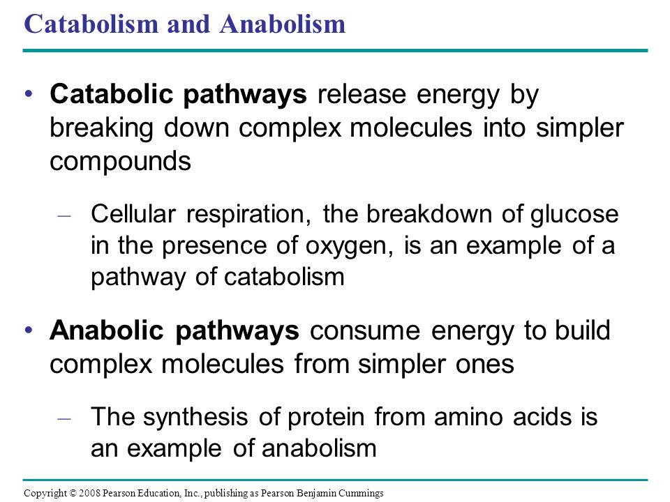 Catabolism and Anabolism