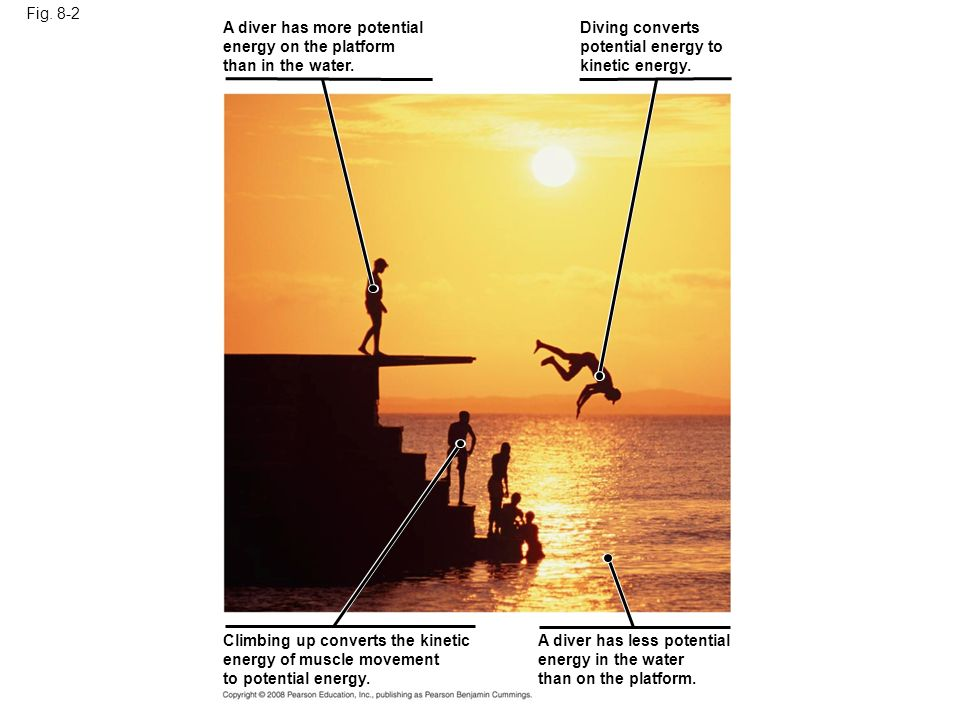Fig. 8-2 A diver has more potential. energy on the platform. than in the water. Diving converts.