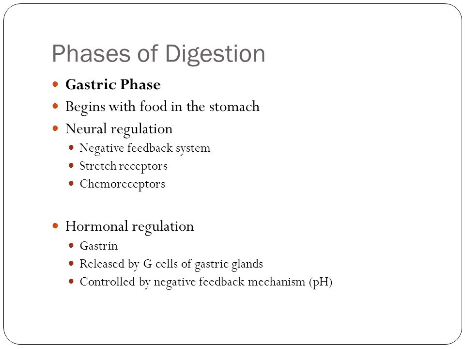 Phases of Digestion Gastric Phase Begins with food in the stomach