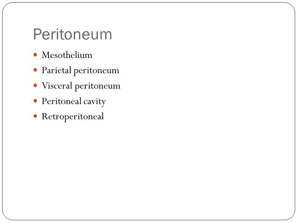 Peritoneum Mesothelium Parietal peritoneum Visceral peritoneum