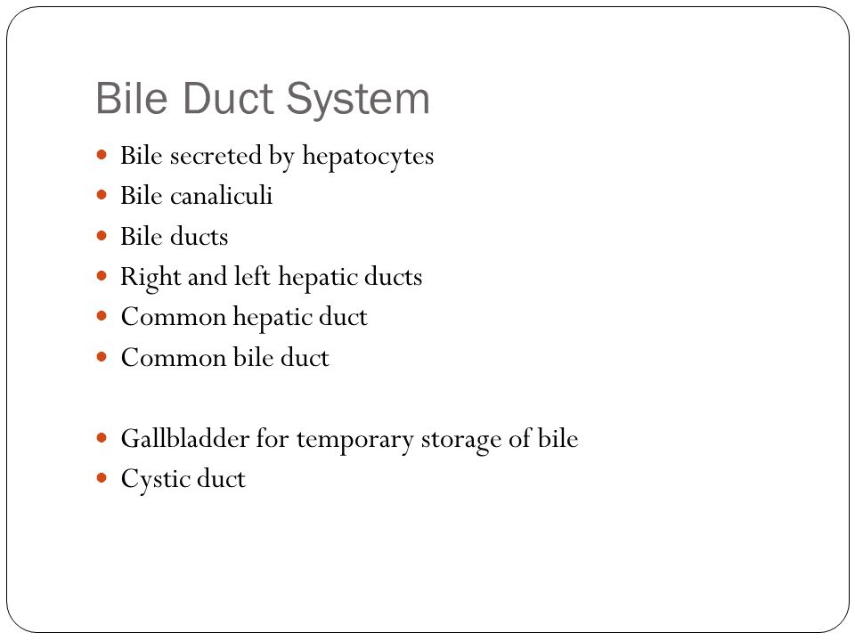 Bile Duct System Bile secreted by hepatocytes Bile canaliculi