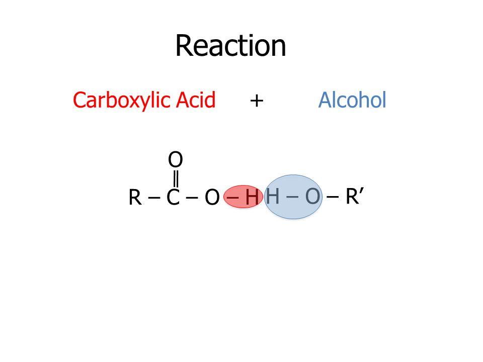 Reaction Carboxylic Acid + Alcohol O R – C – O – H H – O – R'