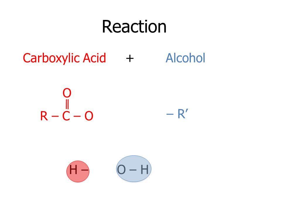 Reaction Carboxylic Acid + Alcohol O – R' R – C – O H – O – H
