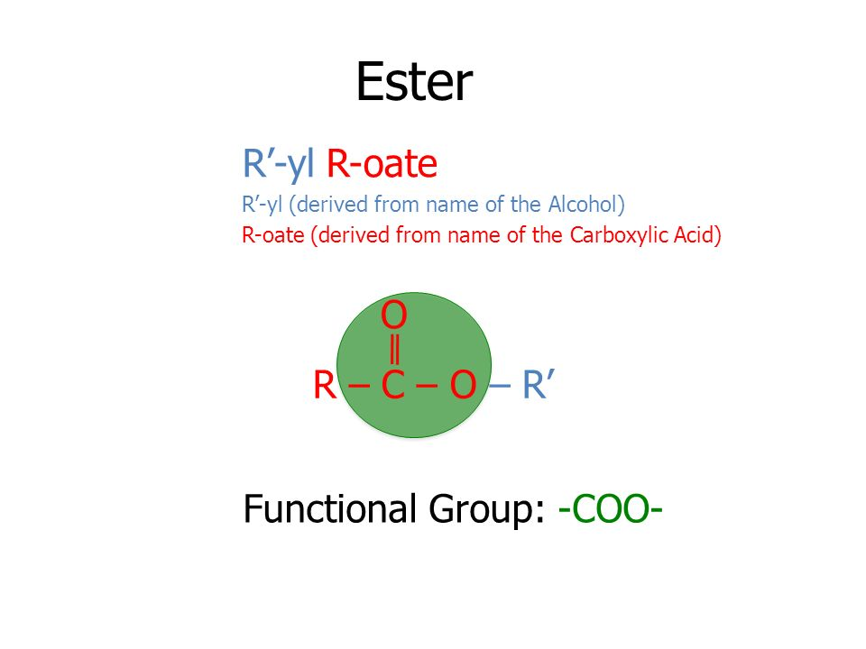 Ester R'-yl R-oate O R – C – O – R' Functional Group: -COO-