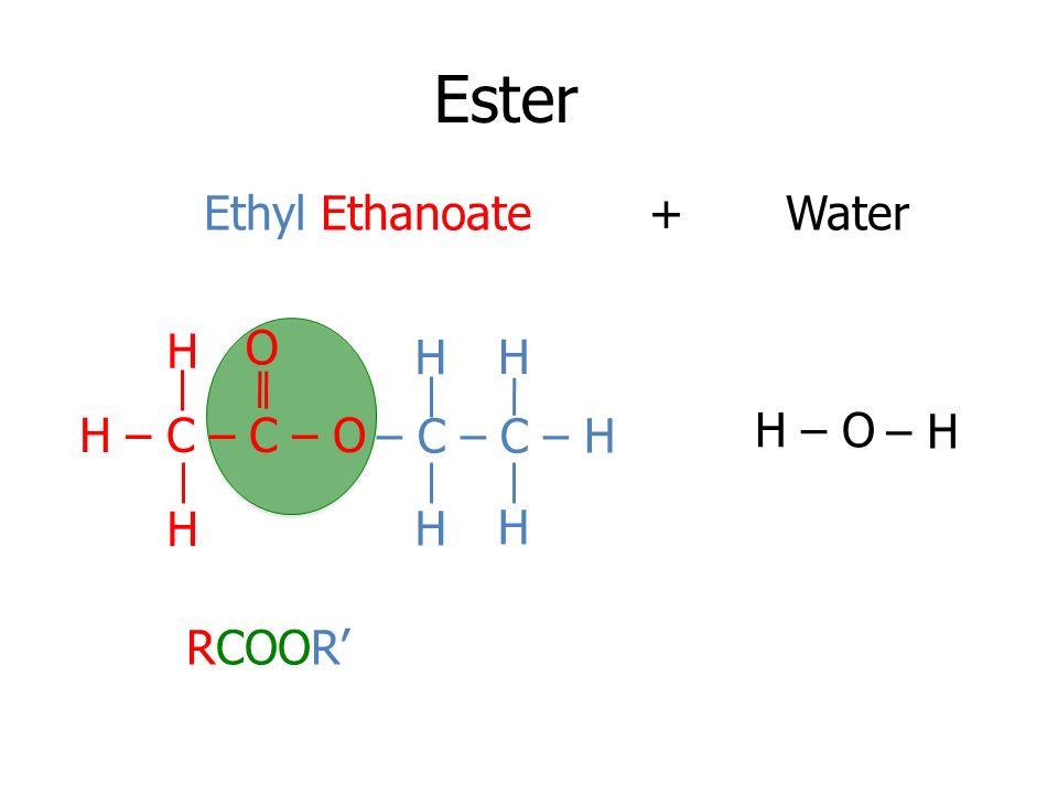Ester Ethyl Ethanoate + Water H O H H H – C – C – O – C – C – H H – O