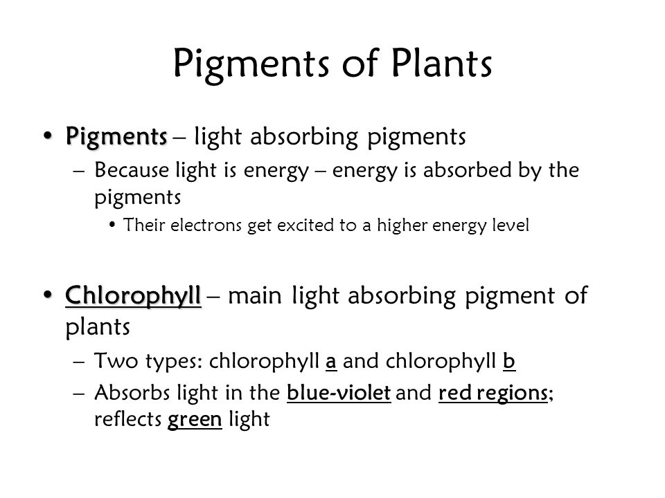 Pigments of Plants Pigments – light absorbing pigments
