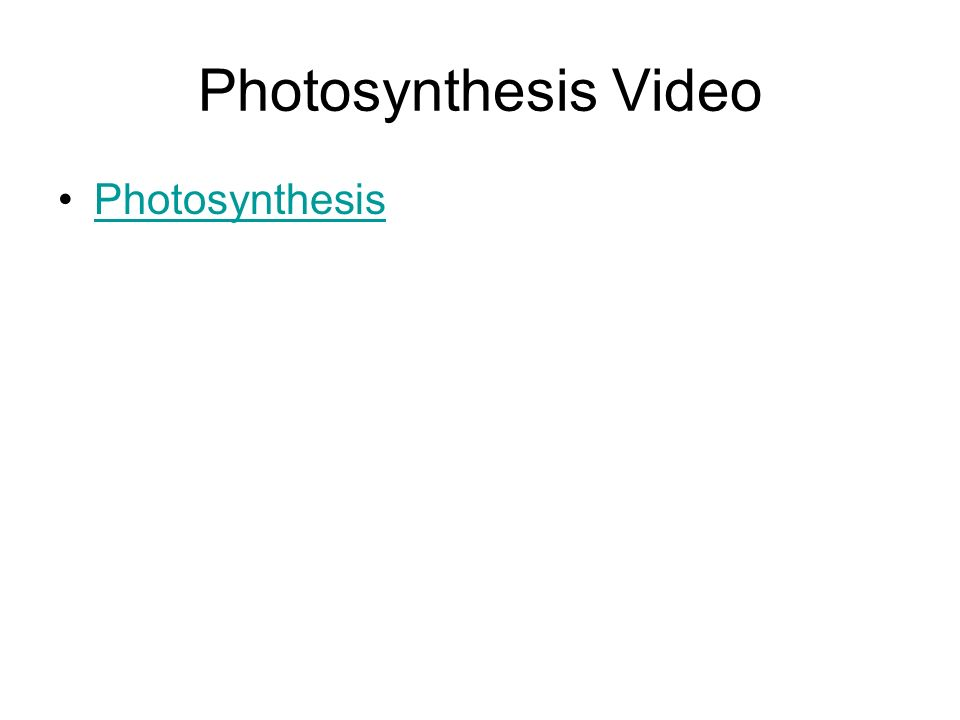 Photosynthesis Video Photosynthesis