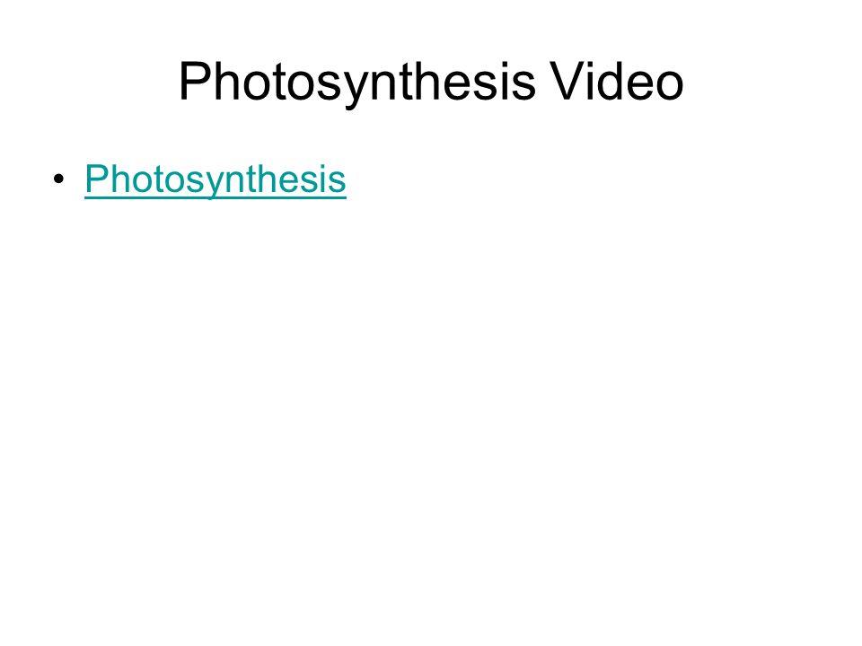 Photosynthesis Video Photosynthesis