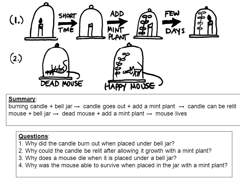 Summary: burning candle + bell jar → candle goes out + add a mint plant → candle can be relit.
