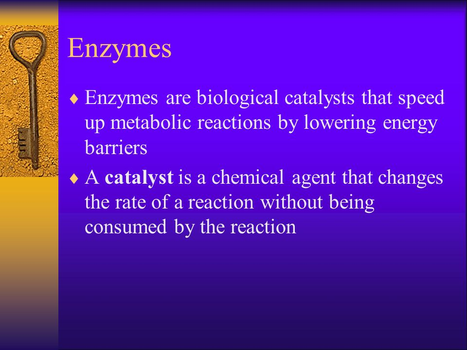 Enzymes Enzymes are biological catalysts that speed up metabolic reactions by lowering energy barriers.