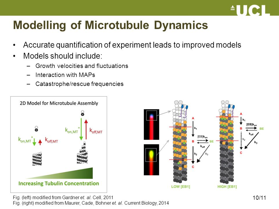 Modelling of Microtubule Dynamics