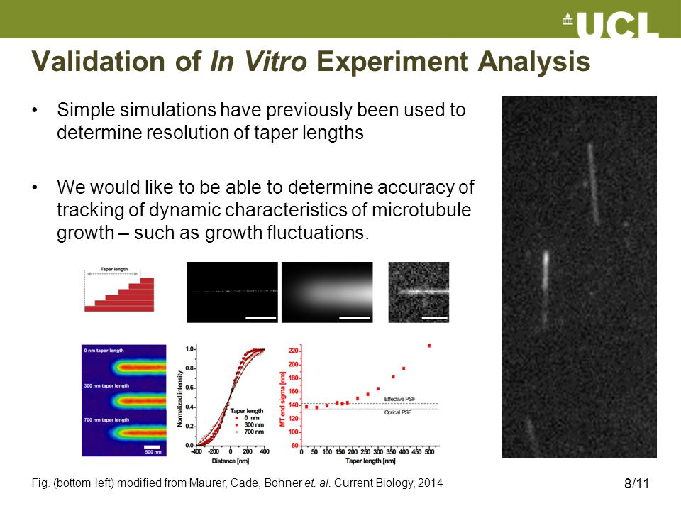 Validation of In Vitro Experiment Analysis