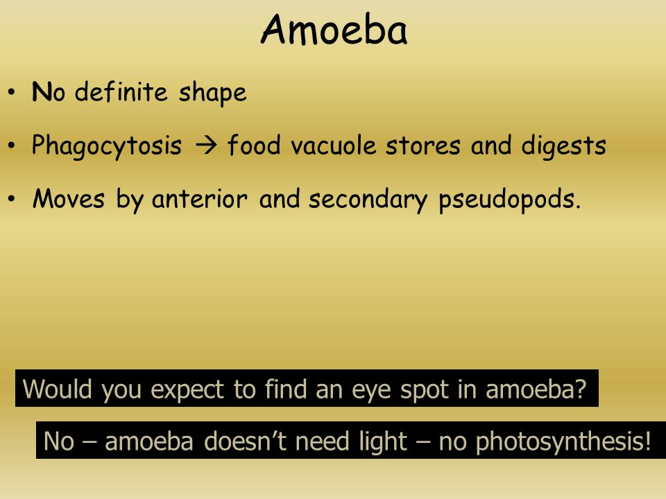 Amoeba No definite shape